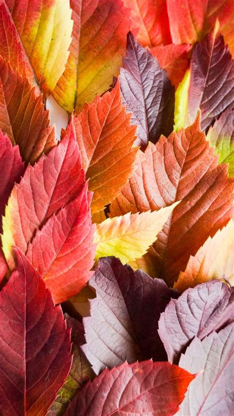 Iphone Xr Wallpaper Autumn by 14 Iphone Wallpapers To Fall In With Autumn Preppy