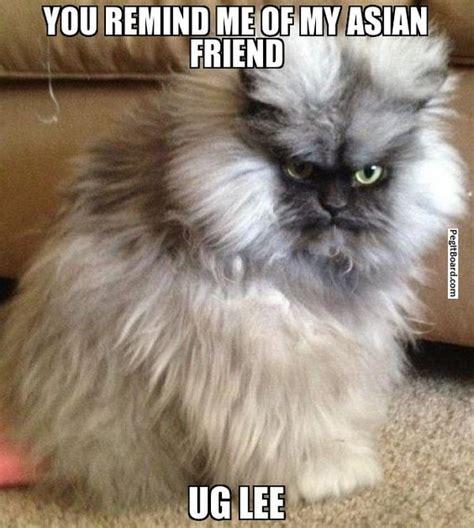 Cat Meme Generator - smart cat meme generator image memes at relatably com