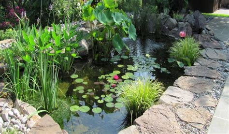 pond  pondless water feature