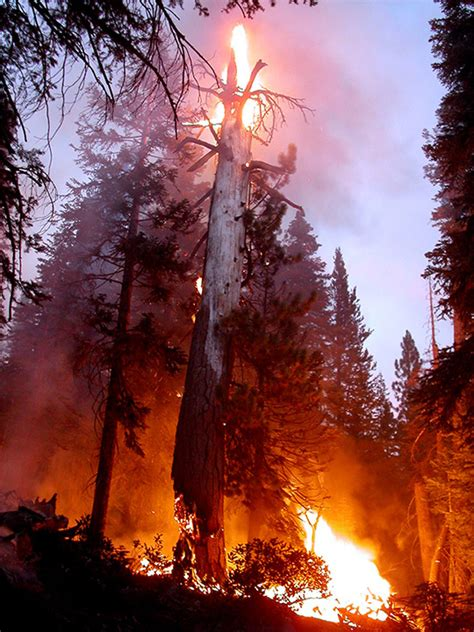 wildland fire unplanned fire photo gallery