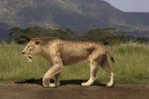 saber tooth cat sabertooth tiger other animals feralfront