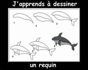 Comment Dessiner La Mer : des fiches j 39 apprends dessiner les animaux mer pinterest fiches les animaux et dessiner ~ Dallasstarsshop.com Idées de Décoration