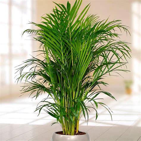 Conheça as plantas ideais para as áreas comuns dos ...