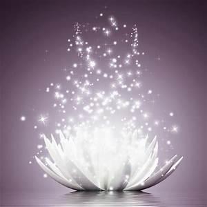 Bild Hochkant Format : artland glasbild lotus blume botanik seerose digitale kunst online kaufen otto ~ Orissabook.com Haus und Dekorationen