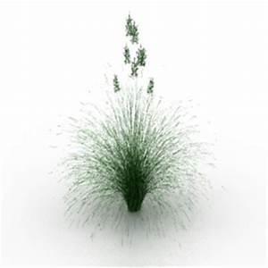 3D Gardening Plant lawn grass Idaho fescue N300813 3D