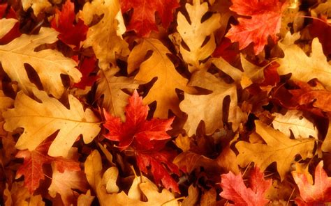 pictures of autumn leaves download autumn leaves wallpaper 1920x1200 wallpoper 368976