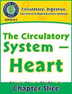 Circulatory  Digestive  U0026 Reproductive Systems  Heart Gr  5