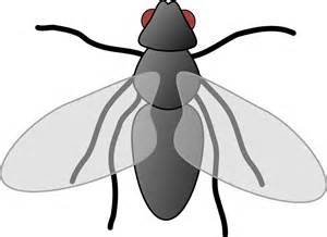 Free vector graphic: Fly, Cartoon, Isolated, Art, Insect   Free Image on Pixabay   309575
