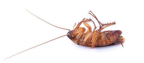 cockroach control  alabama advanced pest control