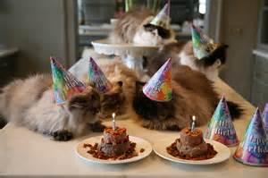 birthday cats 108 cats celebrating their own birthdays