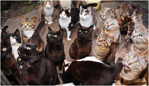 how many cats is too many uk
