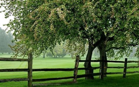 Green Meadow 1080p Hd Desktop Wallpapers 4k Hd