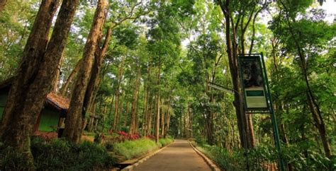 gambar taman hutan raya juanda bandung dago tiket