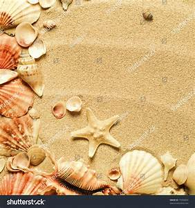 Sea Shells Sand Background Stock Photo 77094853 - Shutterstock