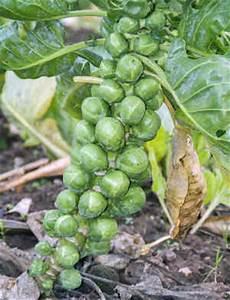 Quel Legume Planter En Septembre : which vegetables can you grow in winter ~ Melissatoandfro.com Idées de Décoration