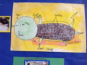 Diagram  As9100 Turtle Diagram Examples Full Version Hd Quality Diagram Examples