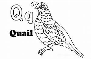 Q-For-Quail - Preschool Crafts