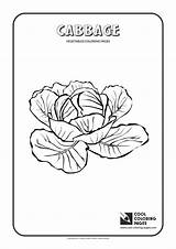 Coloring Pages Cabbage Cool Vegetables Printable Math Worksheet Worksheets Print Grade Pdf Activities Educational Plants sketch template