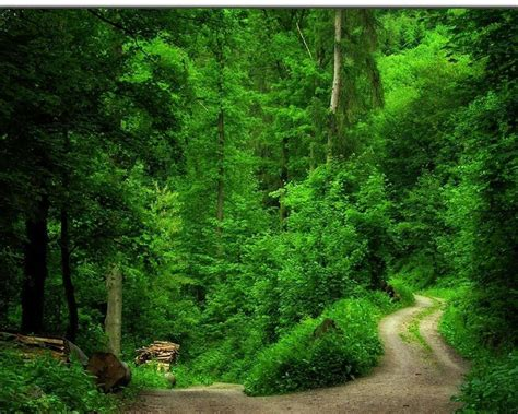 Green Forest Backgrounds by Green Forest Wallpaper Green Wallpaper 20036570 Fanpop