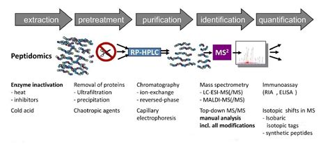 Modification Analysis Definition by Characterization Of Peptide Biomarkers Creative Proteomics