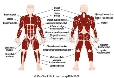 Despite their similar names, teres. Muscles german names chart muscular male body. Muscle chart with german description of the most ...