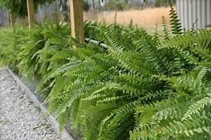 Pflanzenlexikon Mit Bild : pflanzenlexikon outdoor pflanzenarten f r ihre schattenbereiche ~ Orissabook.com Haus und Dekorationen