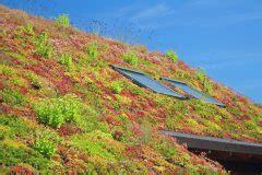 Extensive Dachbegrünung Garage Kosten by Dachbegr 252 Nung Des Carports 187 Diese Kosten Entstehen