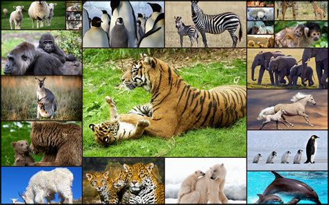 Jigsaw puzzles for kindle fire free. Amazon.com: Cute Animal Puzzles for Kids - Fun and ...