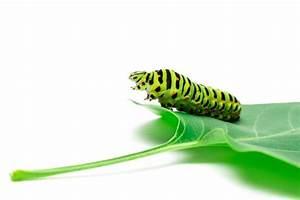 Caterpillar Vectors  Photos And Psd Files