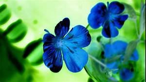 Beautiful Blue Flowers HD Desktop Wallpaper | HD Desktop ...