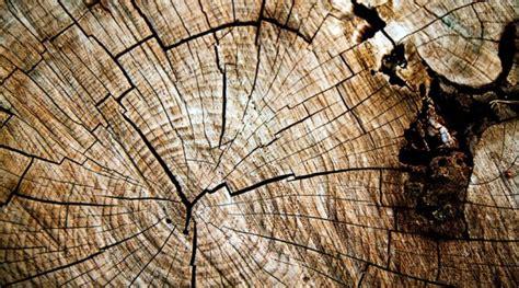 bureau d architecte alinea bois le bois sculpt de cha jongrye bois avec