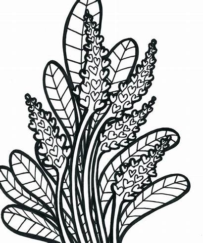 Plants Jungle Drawing Coloring Clipartmag