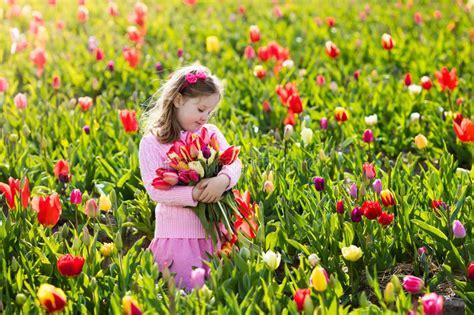 tulip flower garden free stock little girl in tulip flower garden stock image image 91541697