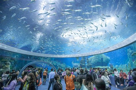 le plus grand aquarium de l aquarium le plus grand du monde en chine voyage insolite