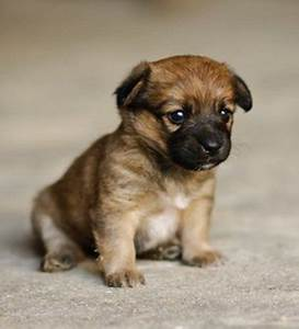 Cute Little Puppy | OMG | Pinterest | Puppys, Dog and Animal