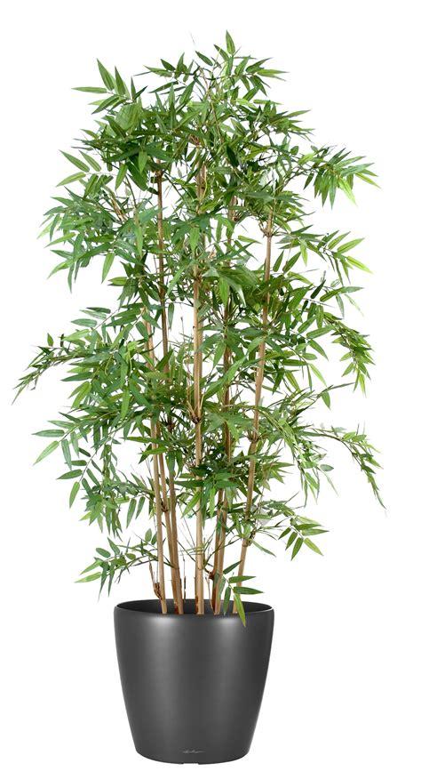 buis artificiel exterieur pas cher plante artificielle exterieur pas cher reverba