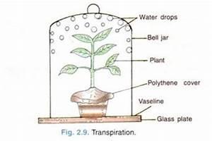 Transpiration Pull Experiment | www.pixshark.com - Images ...