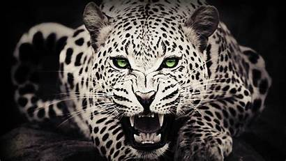 Desktop Wildlife Wild Animals Wallpapers Backgrounds Wallpaperaccess
