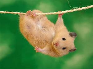 Funny cute hamsters |Funny Animal