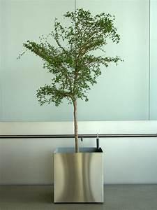 Arbre En Pot : images gratuites arbre branche vert plante en pot ~ Premium-room.com Idées de Décoration