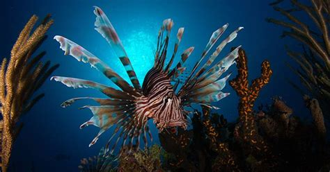 pin  cubas underwater eden