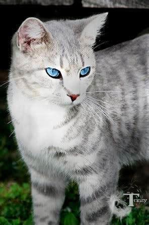 warrior cats schicksal der fuenf sturm der liebe