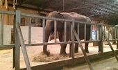 Elephants getting fed. - Picture of Blackpool Zoo ...