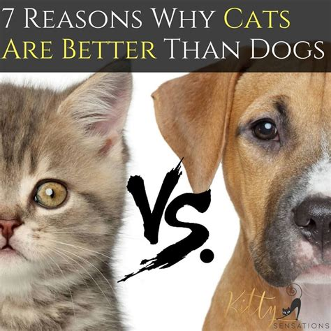 cats dogs better than vs why cat reasons dog articles needy
