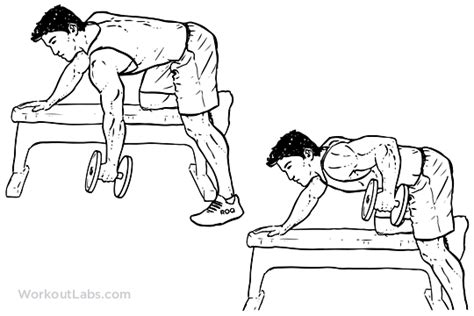 Bench Press How Low by One Arm Dumbbell Row Illustrated Exercise Guide