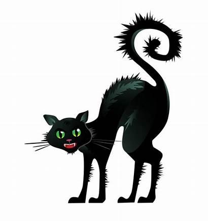Cat Halloween Noir Gato Arching Terror Katze