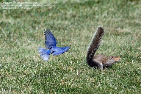 bird watching do squirrels eat safflower seeds 2 by
