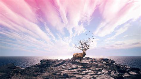 wallpaper digital art  deer