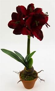 Pflanze Mit Z : amaryllis pflanze mit zwiebel 50cm dunkel rot ohne topf ~ Lizthompson.info Haus und Dekorationen
