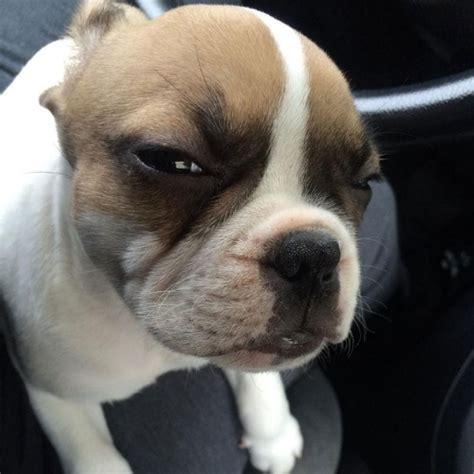 understanding  attitude   dogs side eye